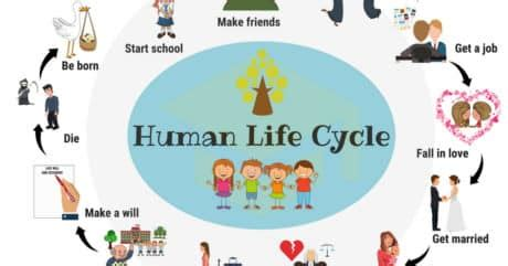 Stages of Life Cycle Development free essay sample - New
